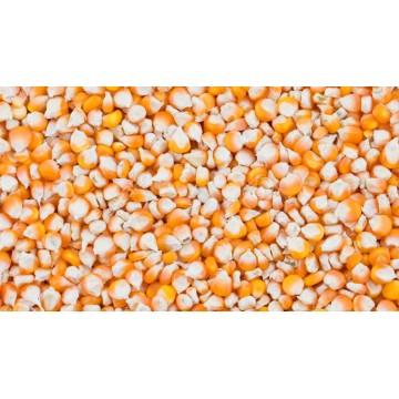 Orange kukurūzai, 25kg